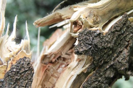 В Ужгороді дерево впало на автомобіль та перекрило дорогу: що відомо