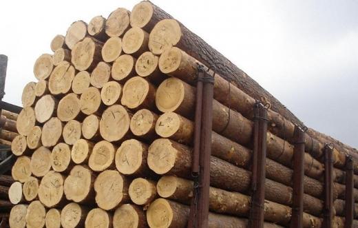 На Закарпатті судитимуть жінку, яка налагодила схему контрабанди лісоматеріалів до країн ЄС