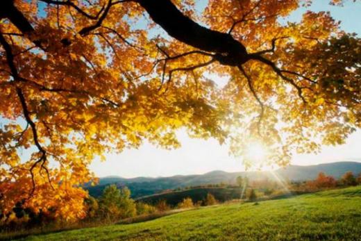 Сухо, сонячно та до +29°C: синоптикиня - про погоду 15 вересня