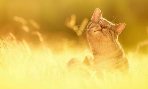 Тепло та без опадів: синоптикиня - про погоду 16 вересня