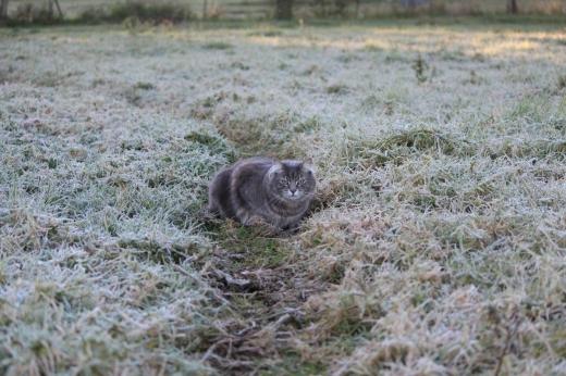 До України йде різке похолодання із заморозками та сильним вітром