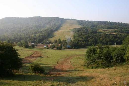 На Великоберезнянщині держслужбовця підозрюють в роздачі ділянок лісового фонду за підробленими документами