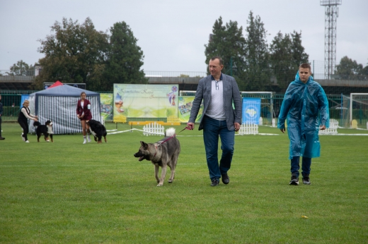 Виставки собак проходять в Ужгороді