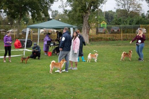 В Ужгороді відбулась національна виставка собак