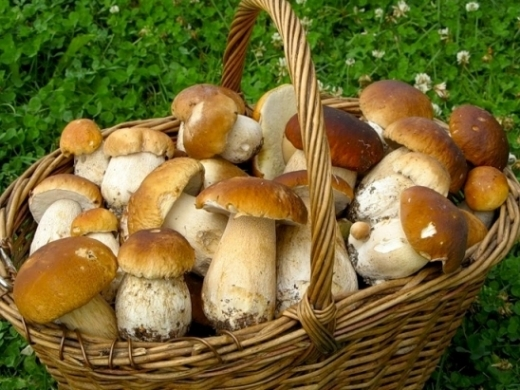 Під час збирання грибів заблукали 2 жінки: пошуки тривають