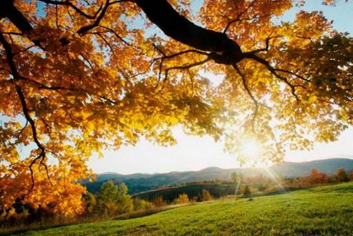 Погода 9 жовтня в Україні буде сонячною і теплою