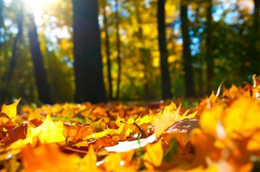 Синоптикиня розповіла про погоду 3-4 жовтня