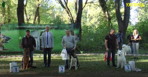 """""""Зірка Закарпаття"""": в Ужгороді відбулася виставка чотирилапих"""