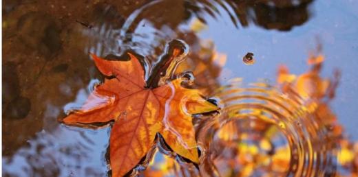 Прогноз погоди на 7 жовтня: синоптикиня спрогнозувала дощі майже по всій Україні