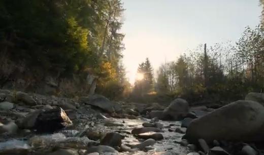 У мережі з'явилось відео мальовничих місць Карпатського заповідника