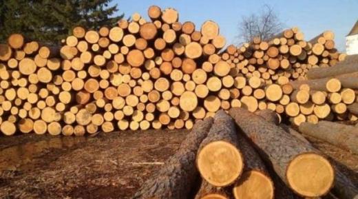 Закарпатського лісничого будуть судити за отримання  хабара