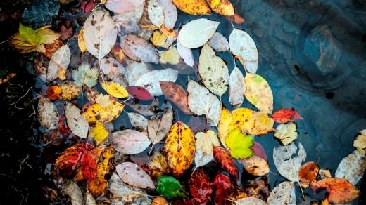 Погода 16 жовтня: опади та прохолода охоплять Захід і Північ