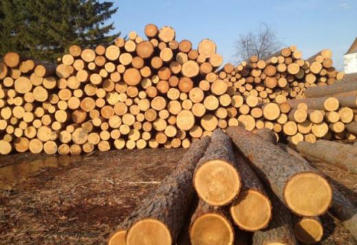 Вантажівку із нелегальною деревиною зупинили на Закарпатті