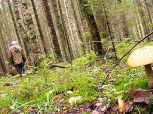 На Перечинщині у лісі знайшли жінку без ознак життя