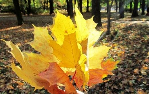 Синоптик: четвер в Україні побуде любимчиком осені