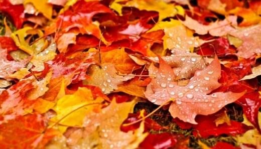 Прогноз погоди на 2 листопада: в Україні розпочинаються осінні дощі
