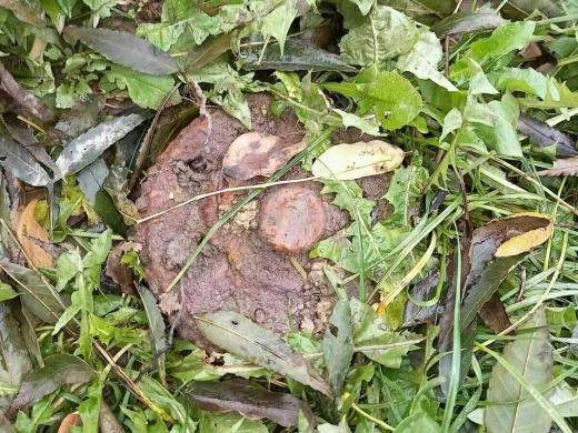 На закарпатському цвинтарі виявили боєприпас