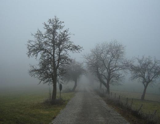 Синоптики Закарпаття попереджають про погану видимість
