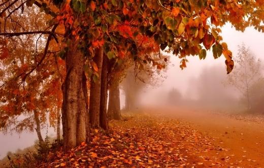Погода 9 листопада: в Україні поступово холоднішатиме
