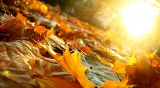 Прогноз погоди на 12 листопада: по всій Україні буде сонячно та прохолодно