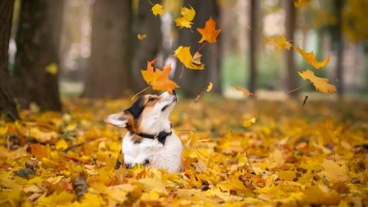 Погода 13 листопада: сонячно та сухо, але холодно