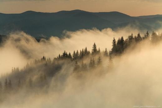 Синоптики попереджають про туман на Закарпатті - І рівень небезпечності