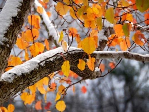 Погода 14 листопада: де в Україні випаде перший сніг
