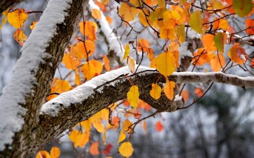 Україну починає засипати снігом, морозяно буде навіть удень: прогноз погоди на 16 листопада