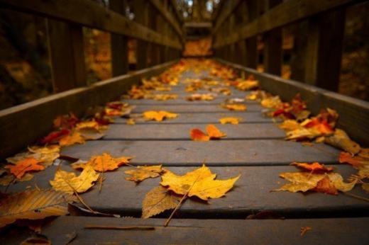 Прогноз погоди на 17 листопада: сніг, дощ та мороз пануватимуть в Україні