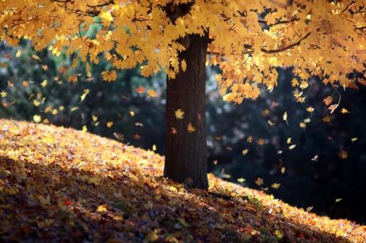 Гороскоп на 18 листопада для всіх знаків зодіаку: день, коли потрібно вибрати між добром і злом