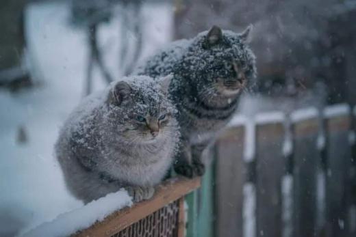 В Україні до кінця тижня сніг і мороз до -12°