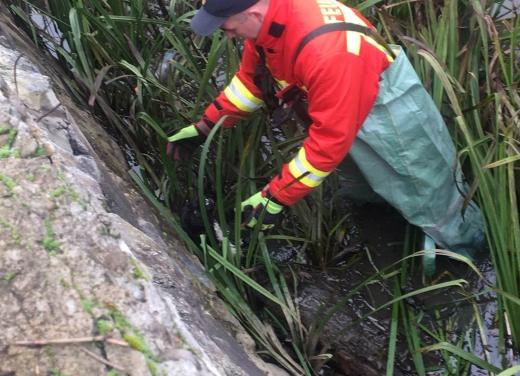 Хустські надзвичайники врятували пса, що застряг на острівці посеред річки