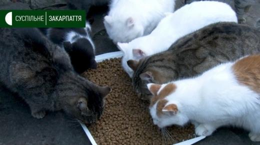 """У закарпатському """"котячому"""" готелі уже близько сотні мешканців"""
