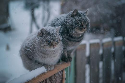 Останні дні листопада в Україні будуть сніжними та холодними