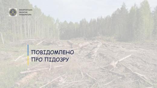 Через незаконні рубки дерев судитимуть майстра лісу - прокуратура Закарпаття