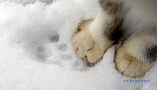 На Закарпатті на зміну морозу прийде дощ та 10-15° тепла
