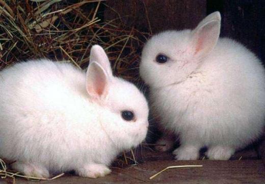 В Ужгородському скансені народилися кроленята (ФОТО)