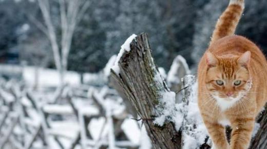 Прогноз погоди на 6 грудня: в Україні буде сонячно і морозяно