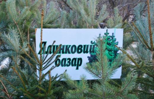 Де в Ужгороді можна буде купити ялинку: визначено місця для торгівлі
