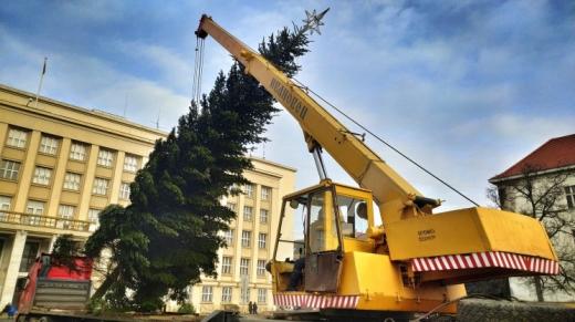 На площі Народній в Ужгороді встановлюють ялинку (фотофакт)