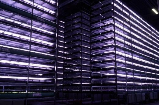 У Данії побудували для вирощування зелені 14-ярусну вертикальну ферму на енергії вітру