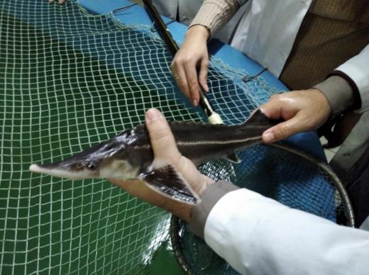 На Буковині науковці вирощують три види рідкісної риби за допомогою «зеленої» енергії