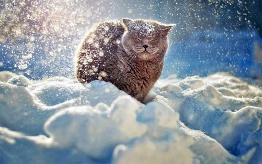 В Україну йде 10-градусний мороз і сніг