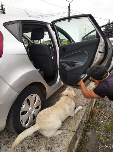 Рамсі, Амур, Чак та інші: митники Закарпаття розповіли про собак, що виявляють порушення на кордоні
