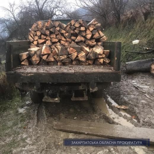 Закарпатця судитимуть за незаконну рубку дерев в нацпарку