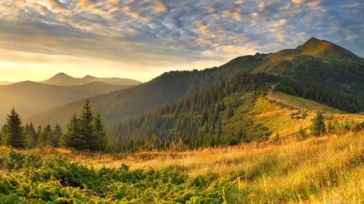 54 мільйони отримав  місцевий бюджет завдяки закарпатським лісам