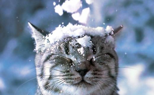 Прогноз погоди на 28 січня: в Україні і сніжитиме, і дощитиме