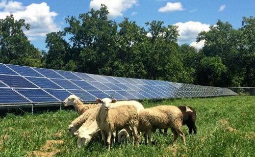 В Австралії на фермі для вівчарства встановлюють сонячну електростанцію