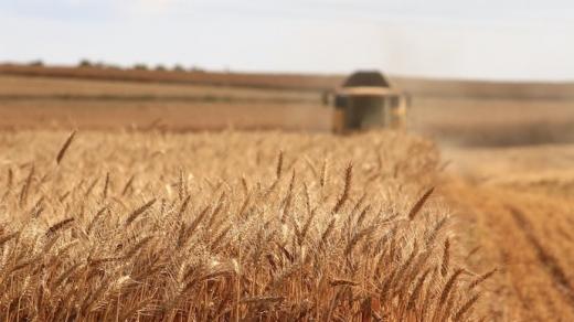 Світові ціни на продовольство зросли найбільше з 2014 року