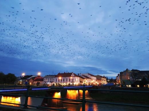 Хокей, футзал, театр і «закарпатські візерунки»: цікаві вихідні в Ужгороді